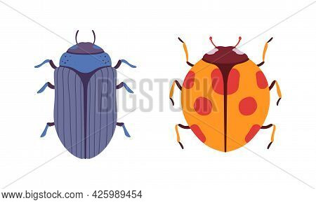 Bug Species Set, Top View Of Ladybug And Scarab Beetles Insects Cartoon Vector Illustration