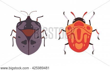 Bug Species Set, Top View Of Bugs Insects Cartoon Vector Illustration