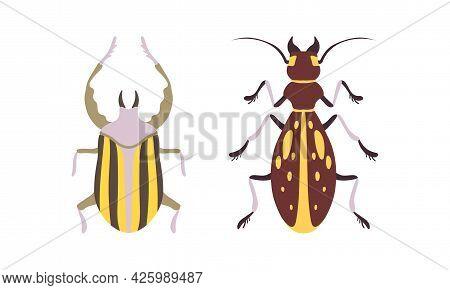 Bug Species Set, Top View Of Bugs Cartoon Vector Illustration