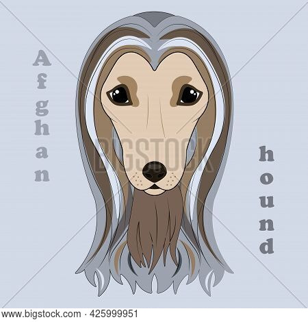 Afghan Hound. Print Of Beautiful Hound Dog.