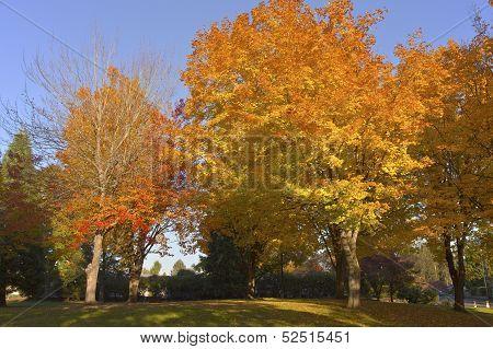 Autumn Colors In A Park.