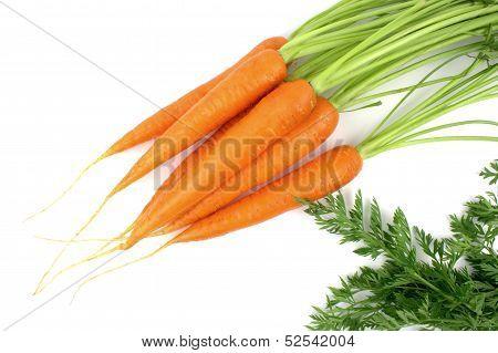 Fresh organic carrots .