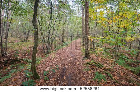 Fallen Leaves On A Forest Path In Autum