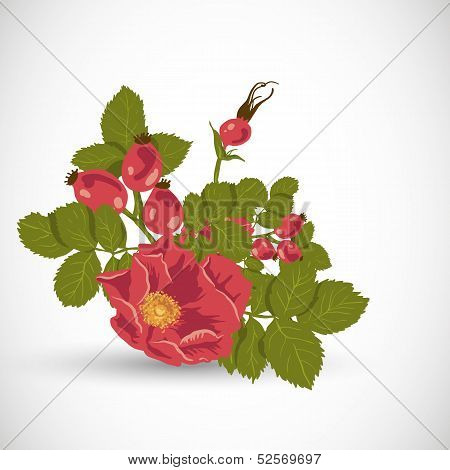 Floral background with wild rose