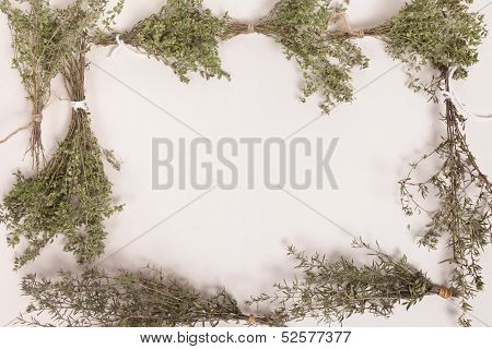 Thyme And Savory Herb Frame