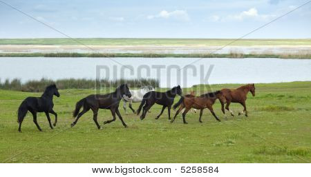 Horses Running /summer / perfect for your use poster