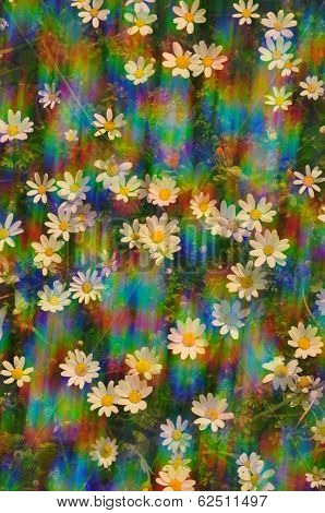 Daisy Flowers Sunny Spring Day