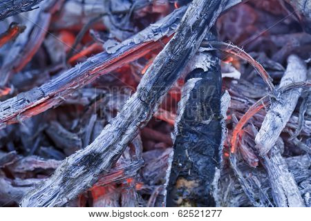 burning in the fire tree