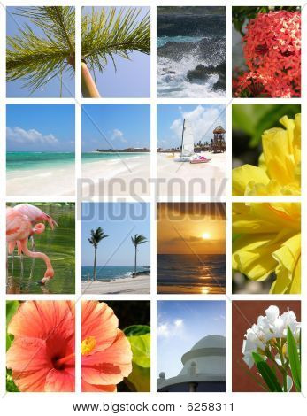 Paradise Collage