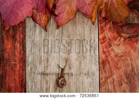 snail crawling on autumn leaves wood background poster