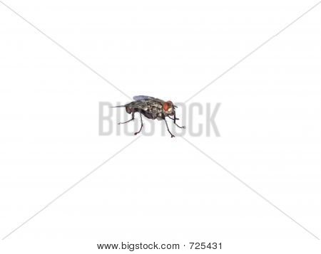 House fly poster