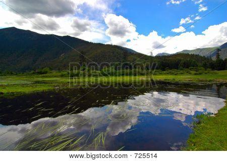 Lunang Sky Forest