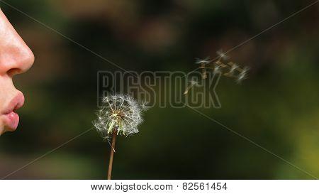 Woman lips blowing an dandelion