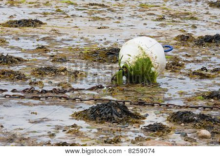 Buoy Covered With Algal Growth At Ebb Tide