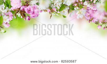 Spring blossom with copy space.