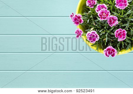 Turquoise Wooden Planks Background With  Top View Of Purple Mini Carnationin Flower Pot
