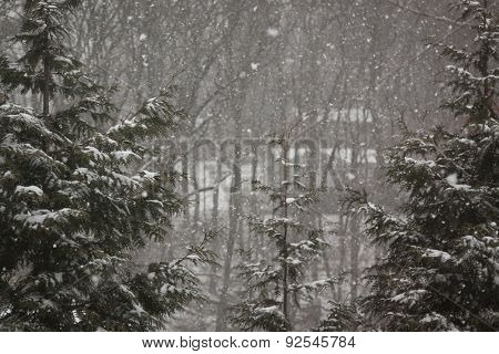 Wintery scene framed with two pine trees in the woods and falling snow.