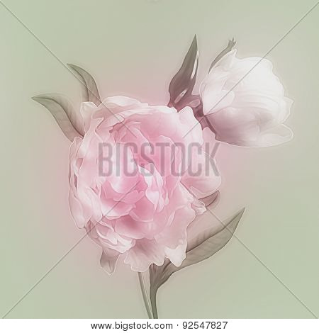 art vintage watercolor blurred floral pattern with pink and white peonies isolated on light green background with space for text