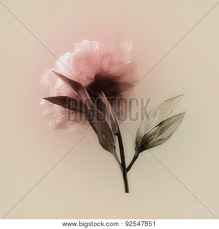 art vintage watercolor blurred floral pattern with pink peony isolated on light golden background with space for text