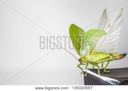 an camouflaged grasshopper go flying in the sky