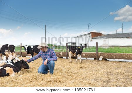 Cowboy and Cows. Portrait of a man on livestock farm. poster