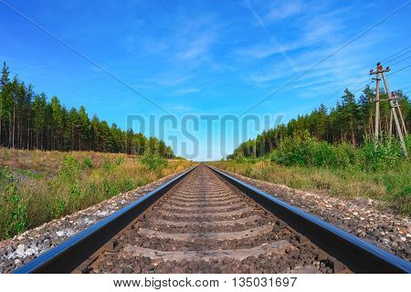 Railroad track with green forest on both sides