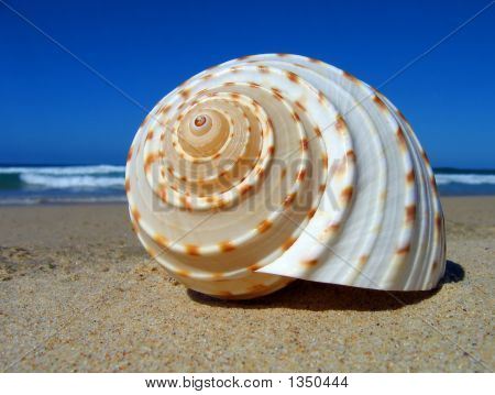 Spiral Sea Shell On The Beach
