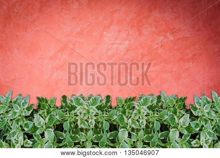 Green plants on handmade creative red wall background, stock photo