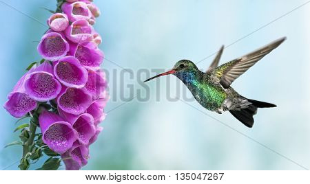 Tiny hummingbird over blurred green summer background