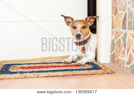 Dog And Owner