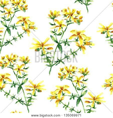 Hand drawn watercolor botanical illustration of the hypericum plant. Hypericum drawing isolated on the white background. Medical herbs illustration, herbarium. seamless pattern. vector
