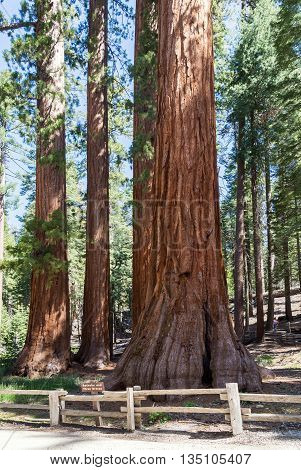 Sequoia National Forest in California Sierra Nevada Mountains