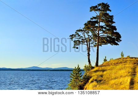 Summer landscape view landscape of tall spreading pine trees on the cliff at Irtyash Lake in Southern Urals Russia - summer landscape in sunny weather. Picturesque summer landscape of Urals nature poster