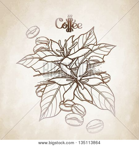 Graphic coffee beans and flowers. Vector vignette. Floral decoration in brawn colors.