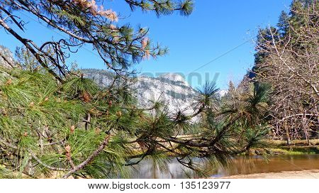 Landscape in Yosemite Valley in Yosemite National Park in California, striking rocks of the Sierra Nevada and Ponderosa pines, blue sky,