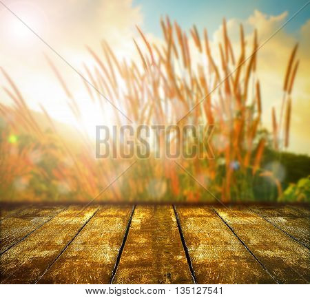 Abstract grass on nature background at sunset with grunge wooden plank for put your products.