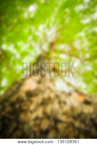Abstract blurred tree nature background or texture