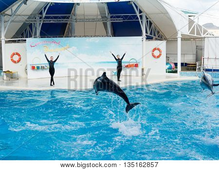KOKTEBEL, RUSSIA - September 20, 2013 - Dolphin show scene. Playful dolphins performing stunts in the pool