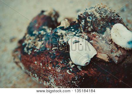 seashells taken during the break of dawn