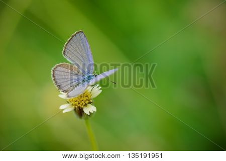 Small Butterfly On Small Flower With Natural Green Background.