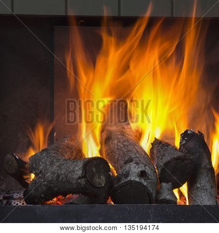 Burning oak wood in grill or fireplace