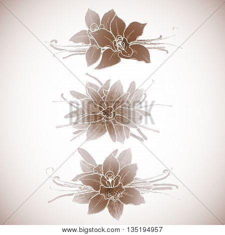 Graphic vanilla flowers collection. Vector floral isolated vignettes