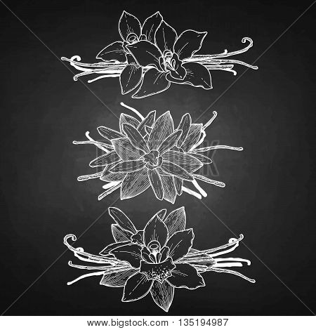 Graphic vanilla flowers collection isolated on chalkboard. Vector floral vignettes