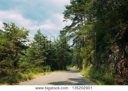 Open Asphalt Mountain Road In Verdon Gorge In France. French Landscape. Road Through Pine Forest