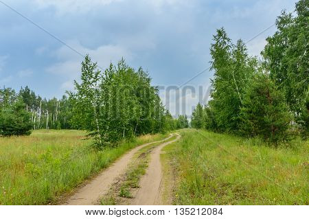 birch and pine trees along the road