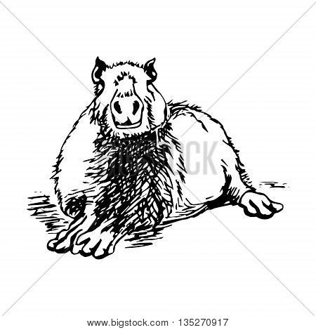 Graphic image large water rodent. The pattern of black lines in the form of capybaras on a white background. Vector illustration