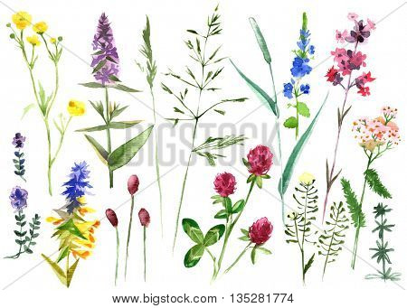 Hand drawn watercolor set with colorful herbs and flowers