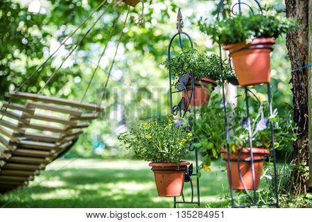 beautiful garden Gardening with pots plants herbs hammock in summer background