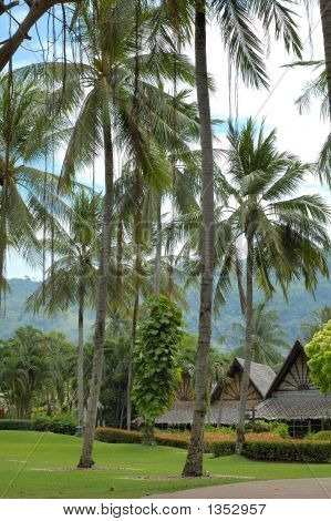 Cottage Surrounded By Palm Tree