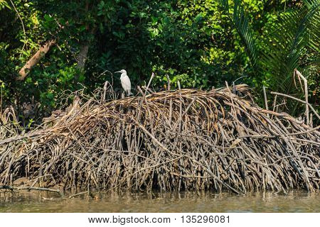 Intermediate egret on the wood heap at riverside in Thailand. Selective Focus.